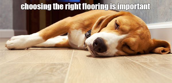 Hardwood Flooring And Dogs All You Need To Know